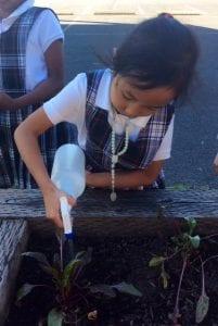 schools garden
