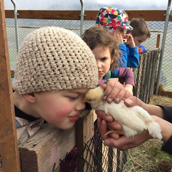 kids and baby chicks (1)